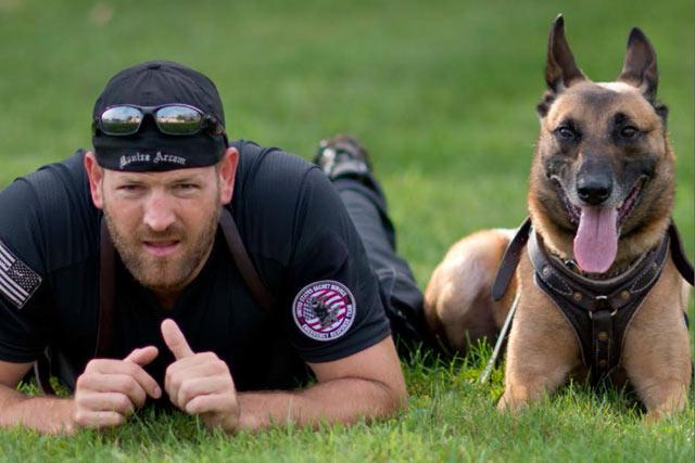 Belgian Malinois k9 police dog
