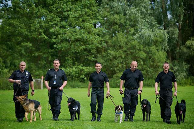Most Common Police Dog Breeds