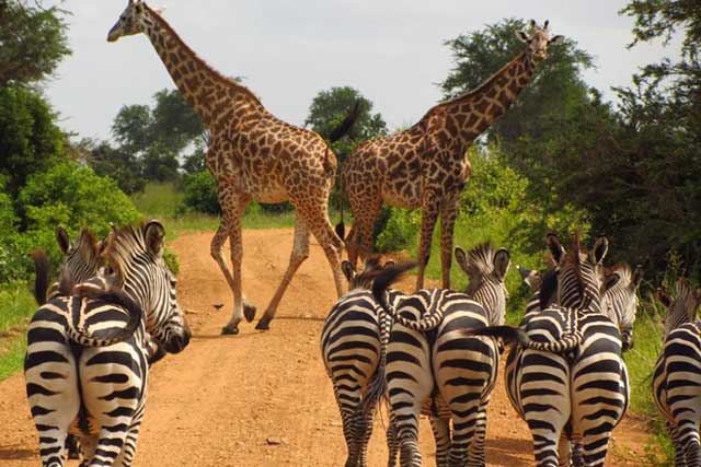 safari destinations in uganda
