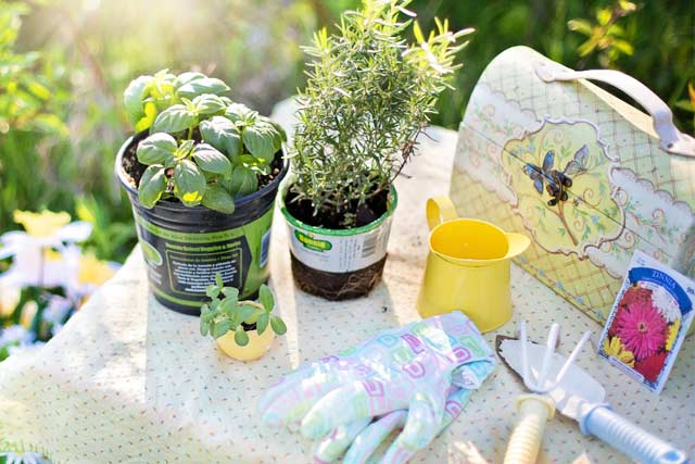 gardening-hobbies-for-couples