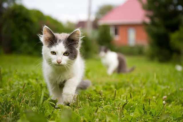 Finalizing Your Cat Enclosure Plans