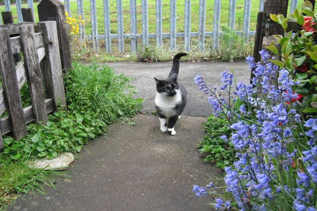 What to Look for in a Cat Patio Enclosure